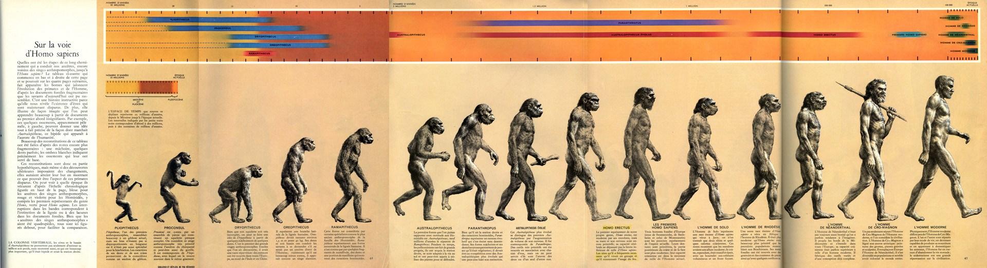 Road to Homo sapiens
